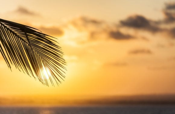 Ibo Island 021 Sunset and palm tree landscape