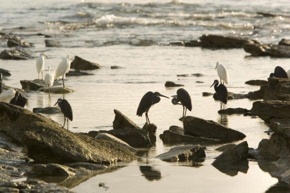 Anantara Medjumbe 035 birdlife