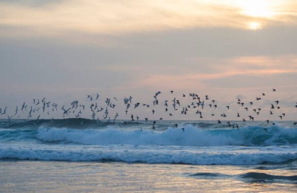 Birds waves sunrise