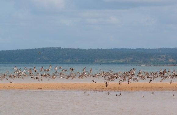 Castelo do Mar 012 birding