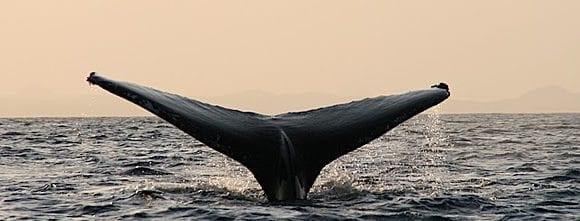 whale e1519284231220