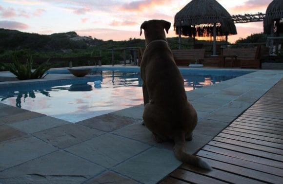 Blue Footprints Lodge 001 Poolside Dog