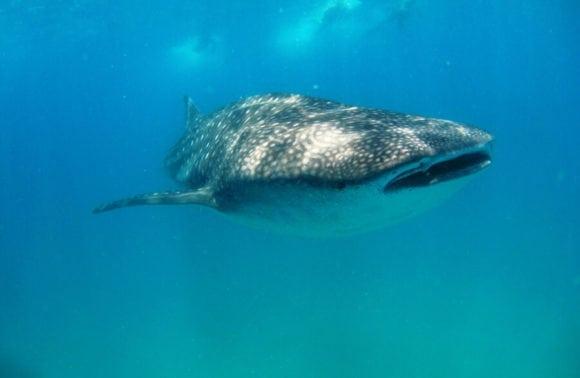 Blue Footprints Scuba Diving 012