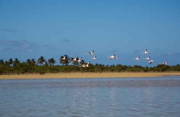 Sentidos flamingo bay 2