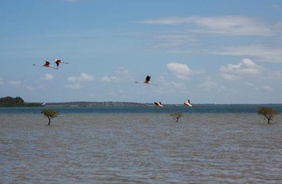 Sentidos flamingo bay