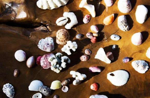 Sentidos shells